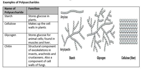 Biochemistry Carbohydrate